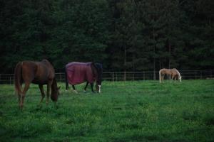 15horses