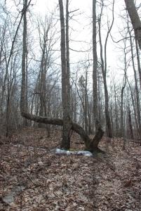 17marker_tree