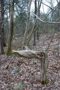 cedar_marker_tree