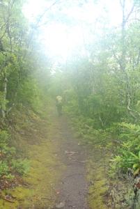 23foggy_trail