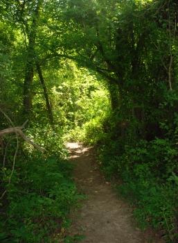 44dry_creek_trail