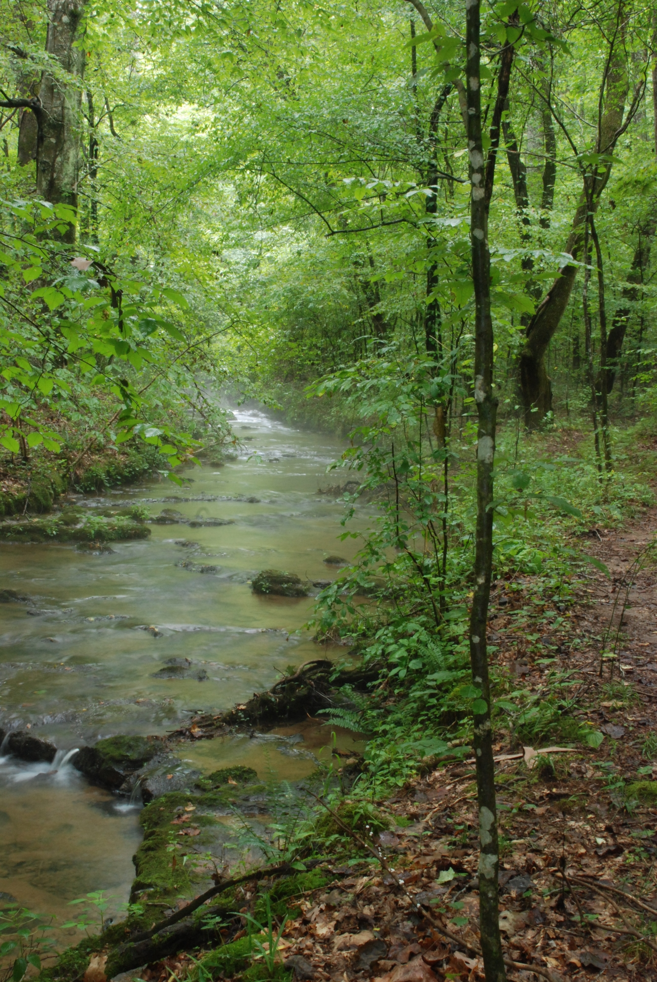 Shoal creek preserve a new favorite place woodlands and for Shoal creek
