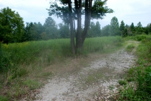 53trail_to_left_of_tree