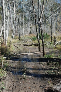 16dancy_muddy_trail