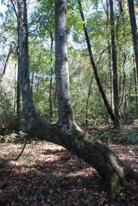 33marker_tree_lookalike