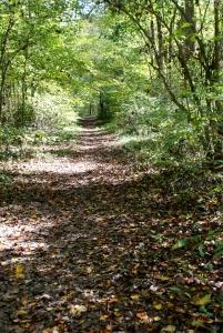 34forks_trail_footbed