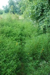 53dry_creek_overgrown