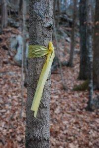wild_trail_marking