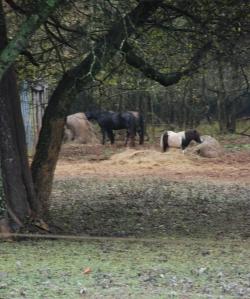 06horses