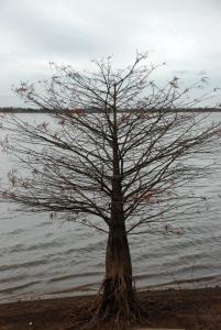 08stunted_tree