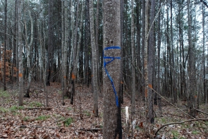 07forestry_markings