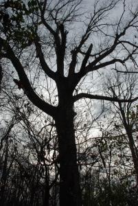 15atmospheric_tree