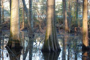 04swamp