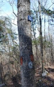 05blazes_tree_sign