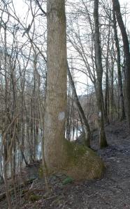 24marker_tree