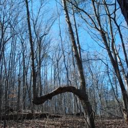 25marker_tree