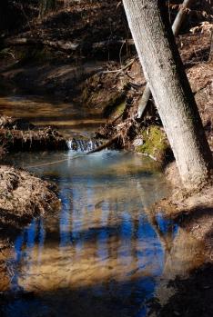 35terrell_conn_creek