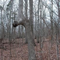 48marker_tree