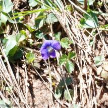 19dog_violet