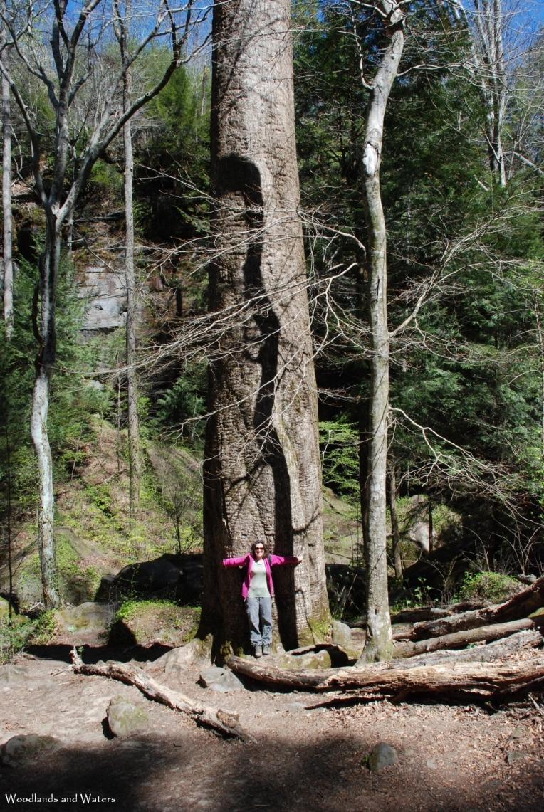 47ruth_big_tree