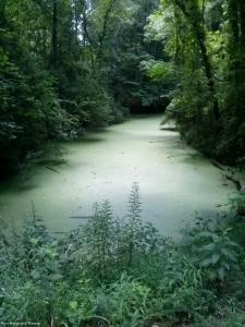 11swampy_pool