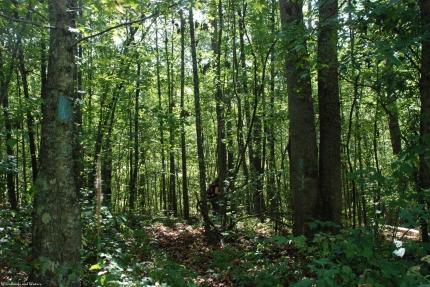 02pinhoti_woods_entrance