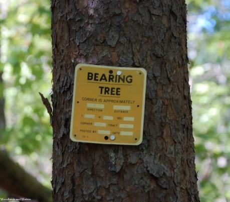21bearing_tree_sign