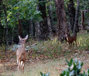26deer_at_cabin