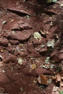 36iron_soil