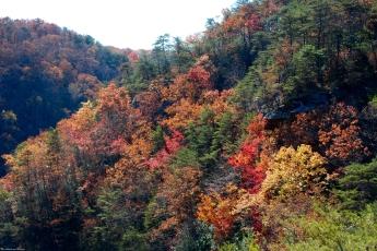 Fall foliage at Cloudland Canyon State Park