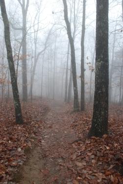 01foggy_trail