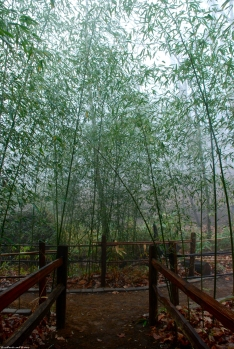 19bamboo_on_trail