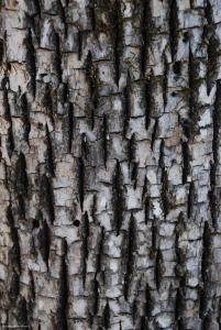 07tree2_bark
