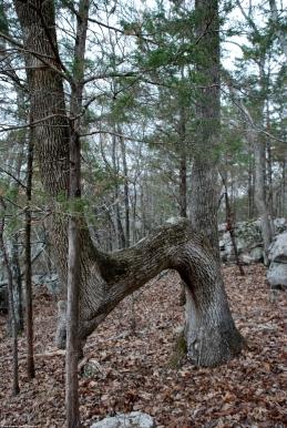 11marker_tree_maybe