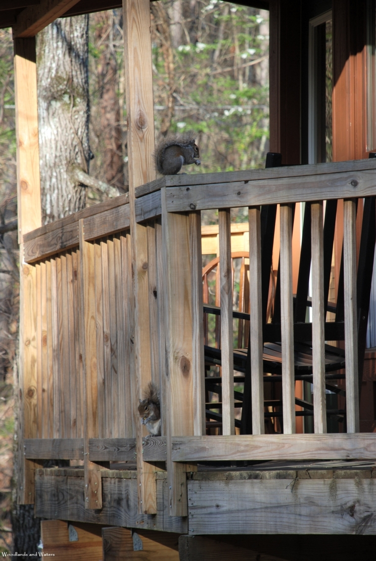 treehouse_balcony_squirrels