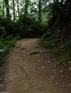 08rhodo_blossoms_trail