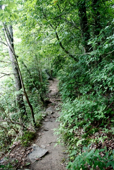 Trail down to West Fork