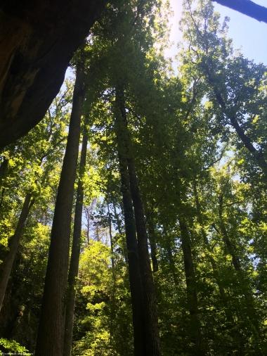 6408_KinlockShelterSoaringTrees