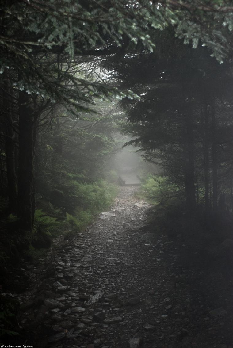 04foggy_path_at_top