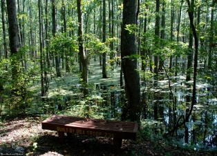 19flooded_area_bench