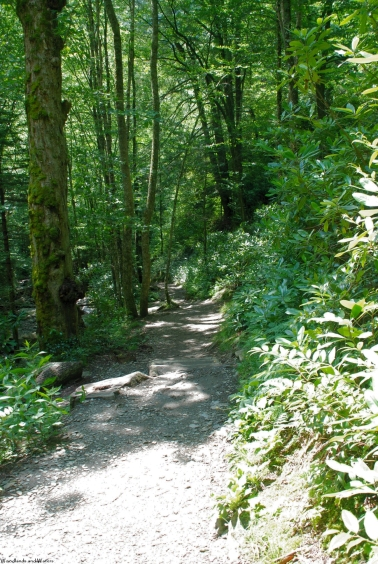 55sunny_lower_trail