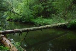 63byrd_creek