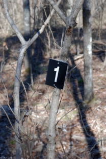 13trail_of_trees_number