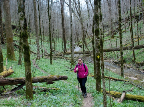 Taylor Hollow State Natural Area, TN