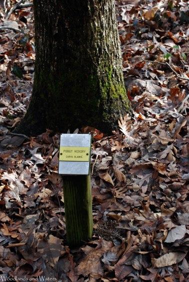 06tree_sign