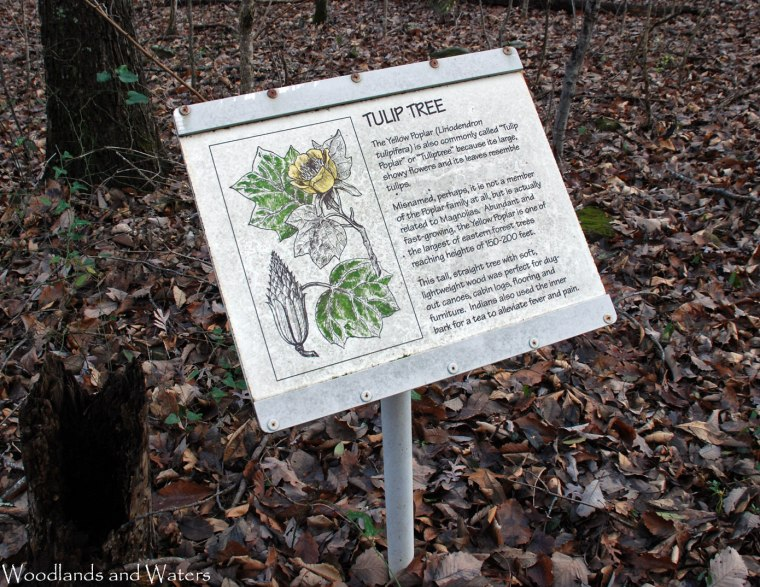 07tulip_tree_sign