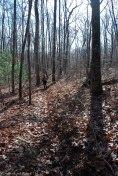 08fern_trail_footbed