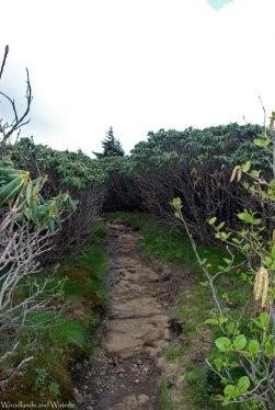16shrubby_path
