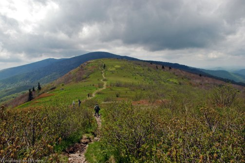 Appalachian Trail, Roan Mountain
