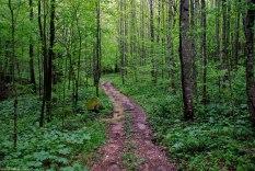 27devils_hollow_trail